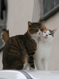 Два милых котенка милуются