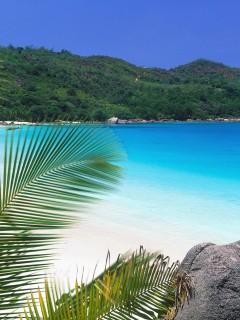 Из-за пальмы вы наблюдаете за тихим уголком океана